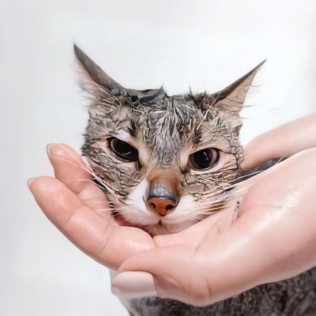 Como fazer uma boa higiene no seu gato