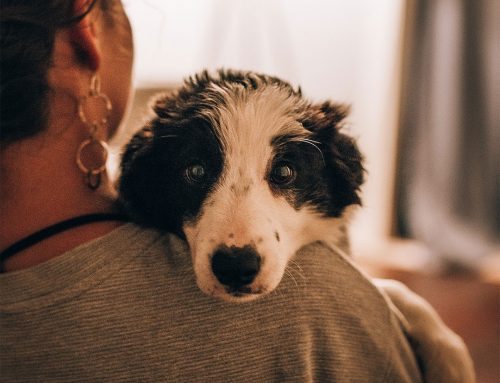 Cuidados de Saúde a ter com o seu Cão