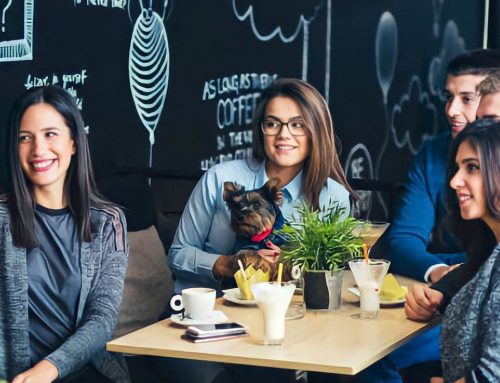Restaurantes Pet Friendly em Portugal
