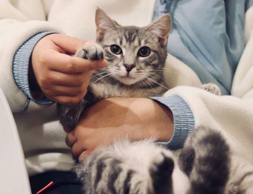 A Saúde do seu gato e principais sintomas