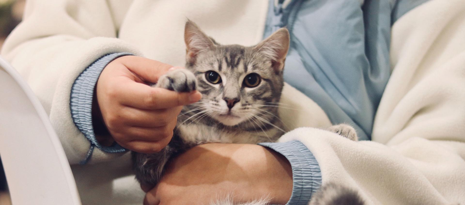 A saúde do seu gato e os principais sinais de alarme